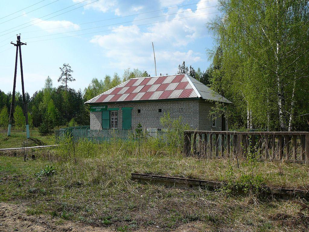 потолке радовицкий мох фото неделя